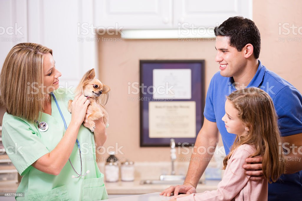 Veterinarian examines Chihuahua dog as pet owners, family looks on. stock photo