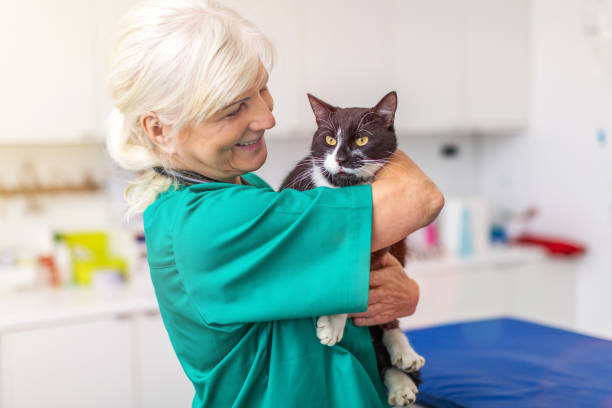 Veterinarian examining a cat in vets surgery picture id1078470910?b=1&k=6&m=1078470910&s=612x612&w=0&h=ncaknnccctlgqt78bolfp0enninv9j hppz2ierseac=