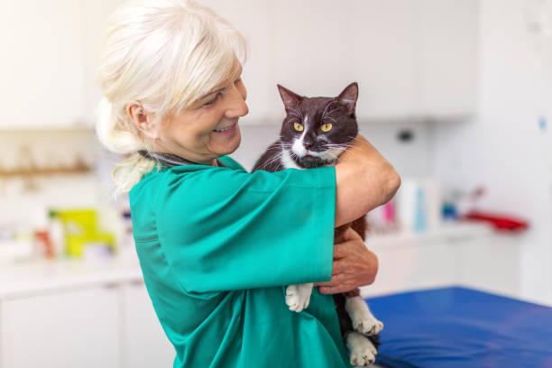 Tierarzt untersucht eine Katze Tierarzt Chirurgie – Foto