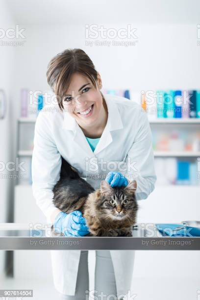 Veterinarian examining a cat on the surgical table picture id907614504?b=1&k=6&m=907614504&s=612x612&h=m4oew6y0g9swgkkyaqrhuwasrzozejabaace0vzwdkq=