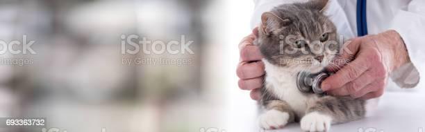 Veterinarian examining a cat picture id693363732?b=1&k=6&m=693363732&s=612x612&h= qipfw22s78nnxfxvee qcrpj1r tkyuoy5syo4mrz4=