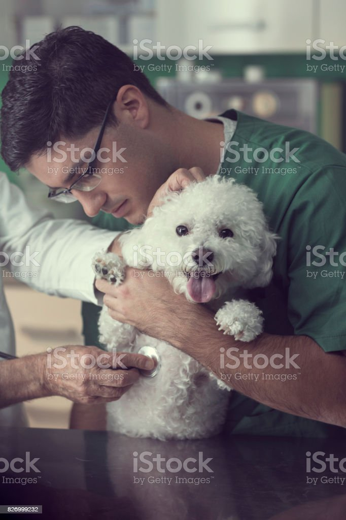 Veterinarian Examining A Dog stock photo