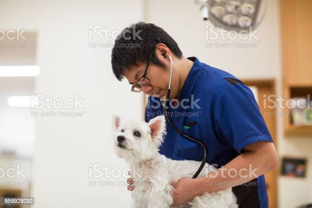 Veterinarian examining a dog with a stethoscope in a clinic picture id859929232?b=1&k=6&m=859929232&s=612x612&h=7zw7vep08jpqq7w4ublbgi0nnee  x6 xtpxgnqod k=