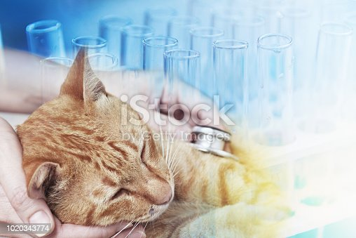 istock Veterinarian examining a kitten 1020343774