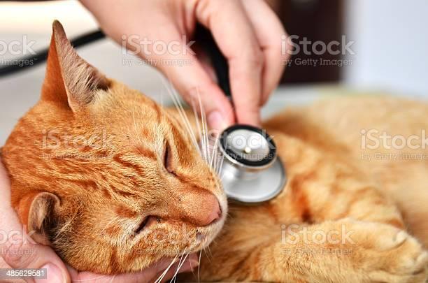 Veterinarian examining a kitten picture id485629581?b=1&k=6&m=485629581&s=612x612&h=gz59h13uk4uxi6xunweoa6sv9n4nu99k5ihfxer0of0=