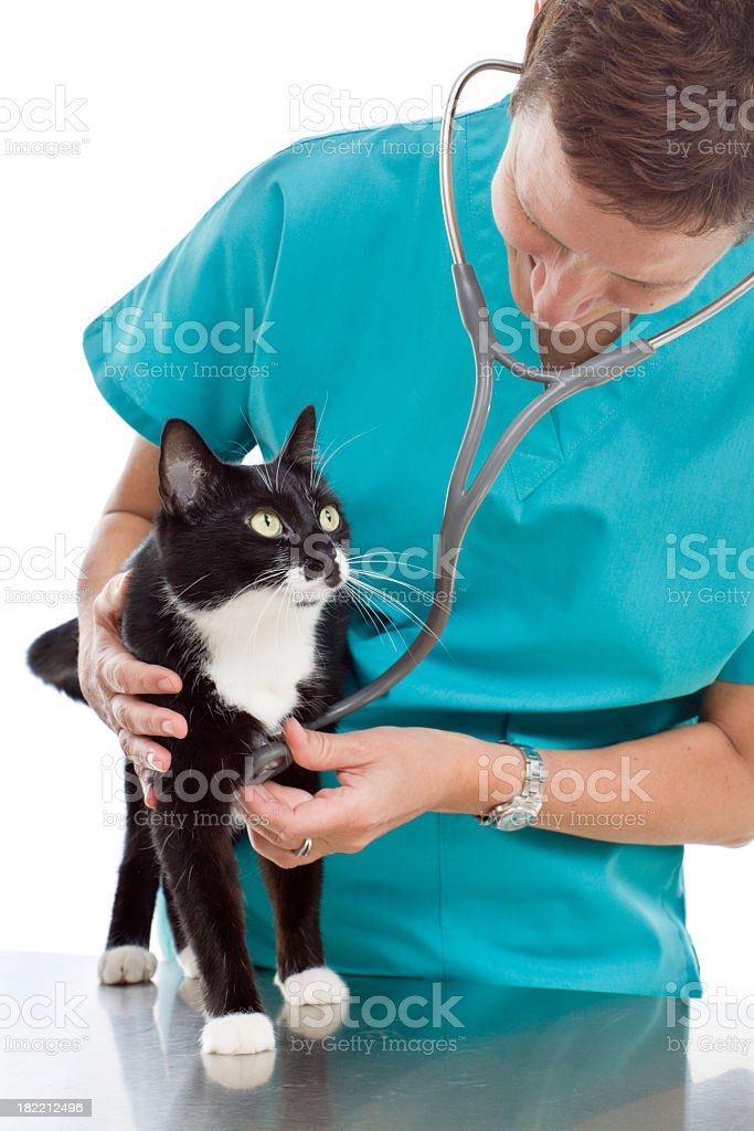 Veterinarian Examining Cat, Caring for Pet on Animal Hospital Table royalty-free stock photo