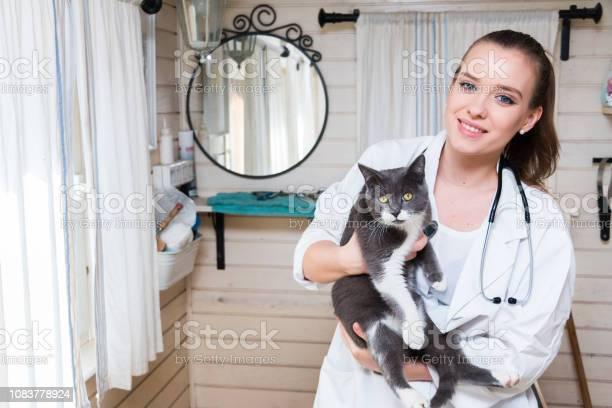 Veterinarian examining cat picture id1083778924?b=1&k=6&m=1083778924&s=612x612&h=khrl7wpp7brtrlrchxo8gtgqarynr8k3 ze eckjn6i=