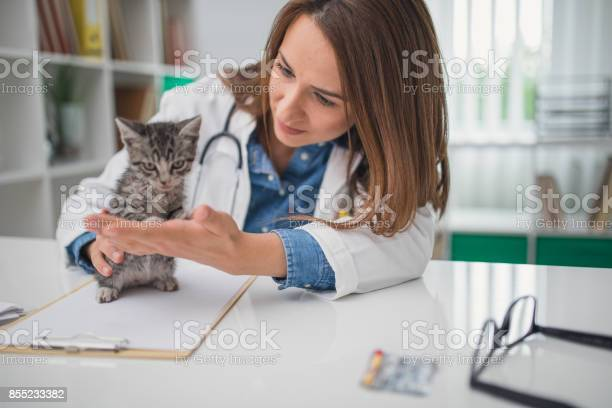 Veterinarian examining cat picture id855233382?b=1&k=6&m=855233382&s=612x612&h=fyahnxvehi0wxknouzsddxg84xe m dsnqyvhtt6zsk=