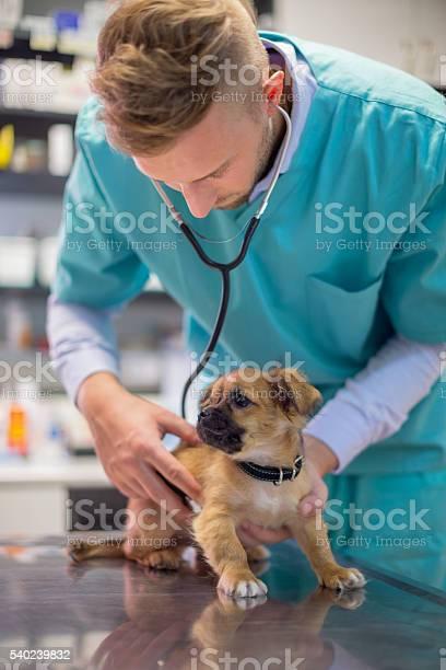 Veterinarian examining cute puppy picture id540239832?b=1&k=6&m=540239832&s=612x612&h=fhi9zizfz18ot jo4nye3di471ewsa3ehrryulfbq6a=