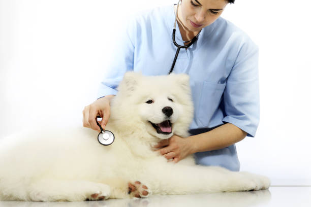 Veterinarian examining pet dog on table in vet clinic picture id641666090?b=1&k=6&m=641666090&s=612x612&w=0&h=hjzgqpr zma2ynxegjzilzbm pnep9pd36onbbzngyw=