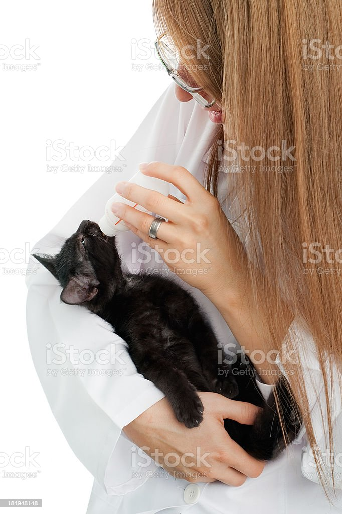 Veterinarian  feed with bottle a cute kitty royalty-free stock photo