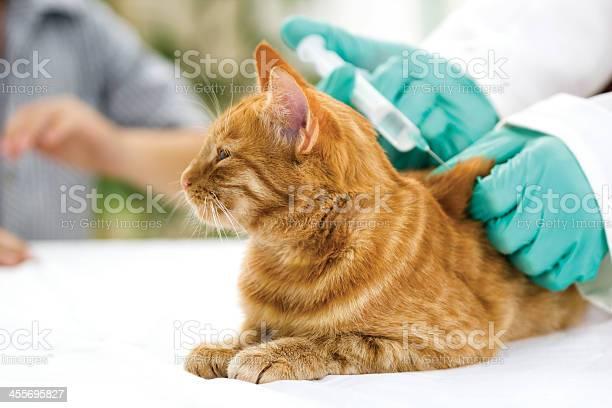 Veterinarian giving injection to a little cat picture id455695827?b=1&k=6&m=455695827&s=612x612&h=lhljcli80zmpym7yt91ogltqk8lqxmya0njrobqxphg=