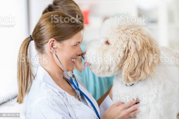 Veterinarian goes nose to nose with canine patient during exam picture id851810276?b=1&k=6&m=851810276&s=612x612&h=85f1oatech0nadl4yvkrruprekn2yqi5xmthwdzzmj0=
