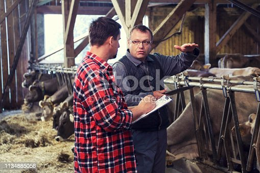 Farmer and veterinarian talking in a barn with cows in the back.