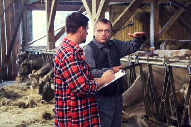 Tierarzt hilft Bauern mit seinem Vieh – Foto