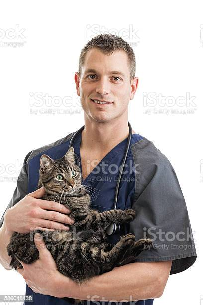 Veterinarian holding cat picture id586048438?b=1&k=6&m=586048438&s=612x612&h=vo2je7e4 eig3ny9yie6osj ht3cm2liiwdu8ou2tec=