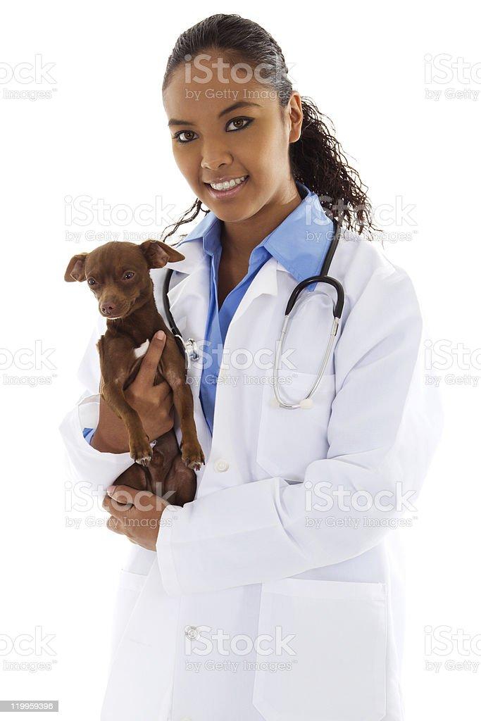 Veterinarian holding small puppy  royalty-free stock photo