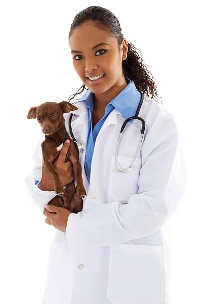Veterinarian holding small puppy picture id119959396?b=1&k=6&m=119959396&s=612x612&w=0&h=fvwrftpzbahuizujbogai mkkayftznsx etwou4wlo=