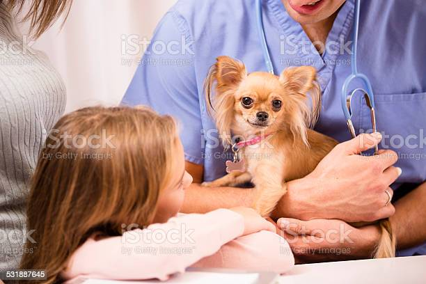 Veterinarian holds chihuahua dog pet owners looking on clinic picture id531887645?b=1&k=6&m=531887645&s=612x612&h= mbs3edvjb4ztclawmyhjqqn6abvr0hui9snbyiqlju=
