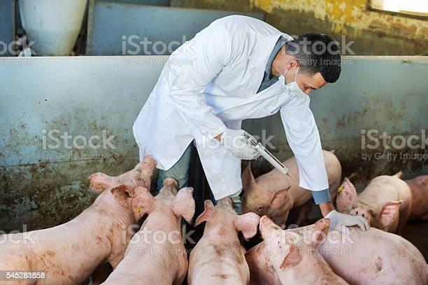 Veterinarian in pigsty picture id545283858?b=1&k=6&m=545283858&s=612x612&h=c1bxbs9fuzlhhcuidjpp9 sslflw rguynbkjmgosou=
