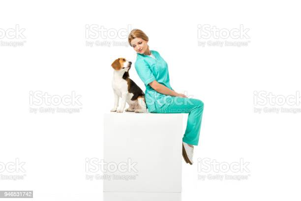 Veterinarian in uniform sitting on white cube together with beagle picture id946531742?b=1&k=6&m=946531742&s=612x612&h=sgmp6w egdza 8kkcbz 9kwclcme6ybfhqgtbpjerdy=
