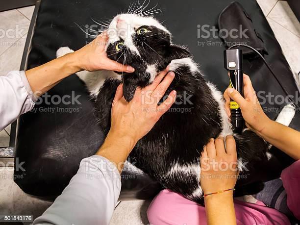 Veterinarian laser therapy picture id501843176?b=1&k=6&m=501843176&s=612x612&h=myh5jg c1xxysrqxpgcvlloew12qraauflwen wyans=