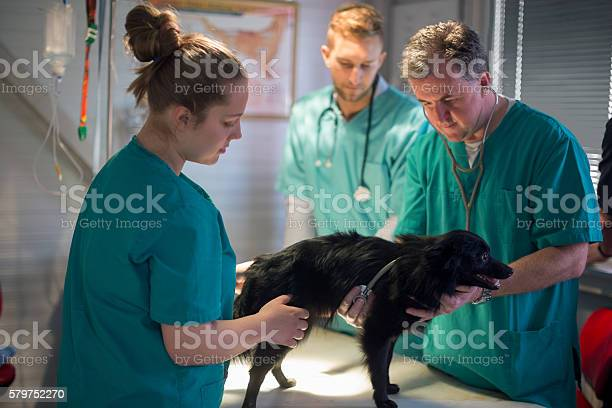 Veterinarian listening to dogs heartbeat picture id579752270?b=1&k=6&m=579752270&s=612x612&h=g46owhs9c8rzxa6utlspbmzrzbjiudsysgo4j7dnqis=