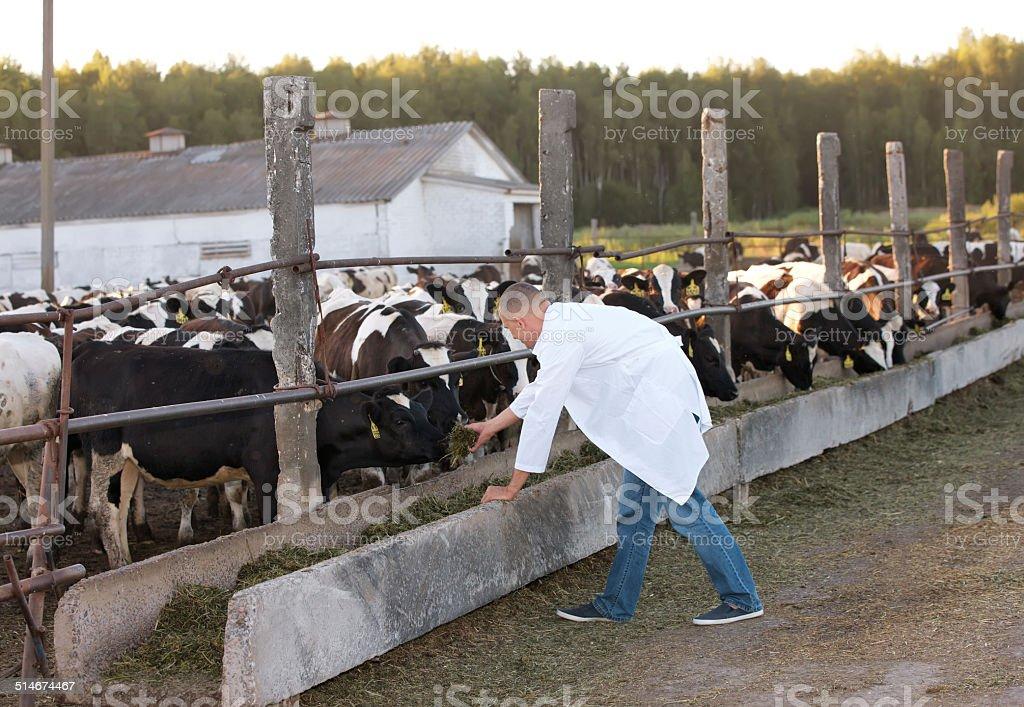 veterinarian man stock photo