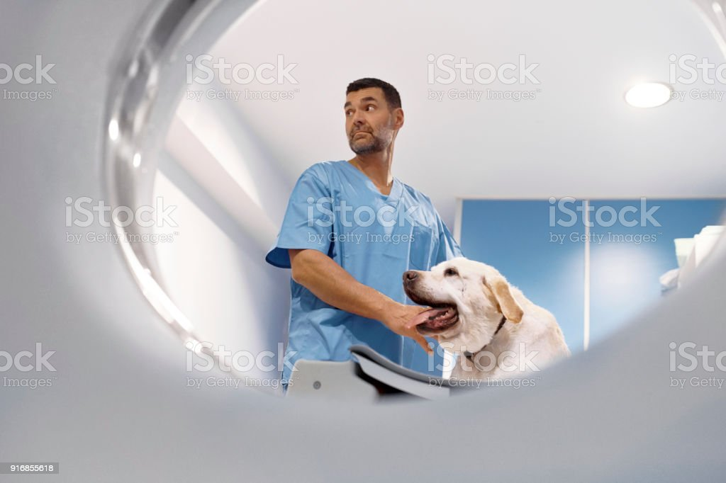 Tierarzt durchführen von Cat-Scan auf labrador – Foto
