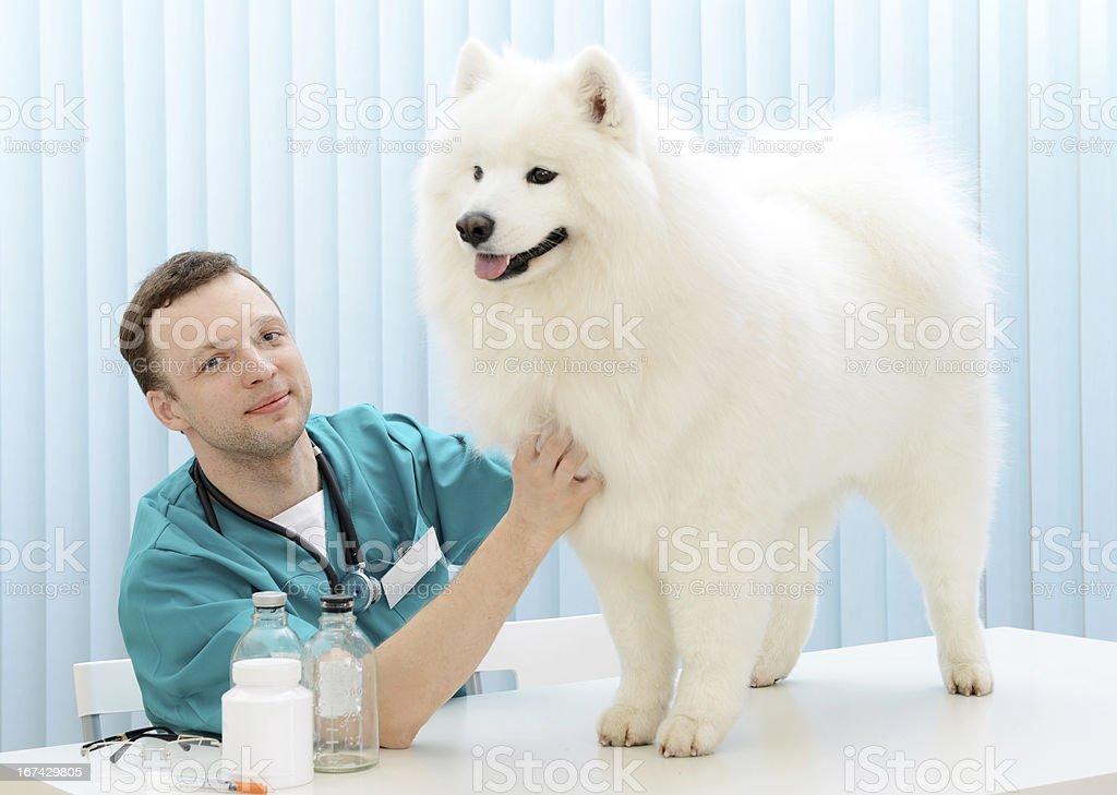 veterinarian royalty-free stock photo