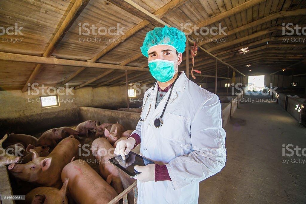 Veterinarian. stock photo