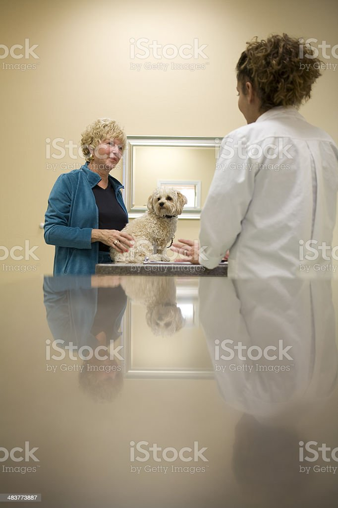 Veterinarian Talks to Client About Treatment Options for Beloved Dog royalty-free stock photo