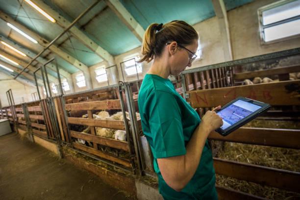 Veterinarian using digital tablet picture id937254042?b=1&k=6&m=937254042&s=612x612&w=0&h=dzsjtraioy1fii38l7vq69b7xxstypp25zjl5tgtf8g=