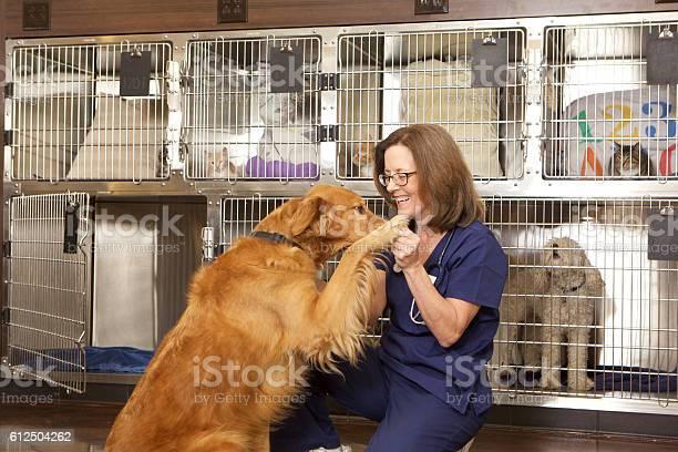 Veterinarian with a golden retriever dog in her office picture id612504262?b=1&k=6&m=612504262&s=612x612&h=rflurmvkzgdrsvkzun2d6hfng8n1umitotyg85jw 0k=