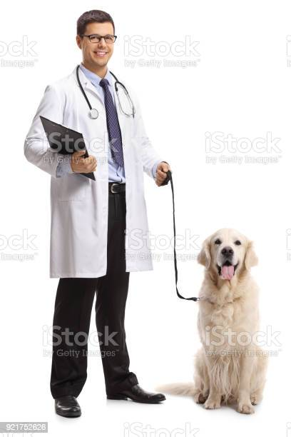 Veterinarian with a labrador retriever dog picture id921752626?b=1&k=6&m=921752626&s=612x612&h=1p5yqlk8adsnzxo gnmhocuqu44v t06kokxwb3kfga=