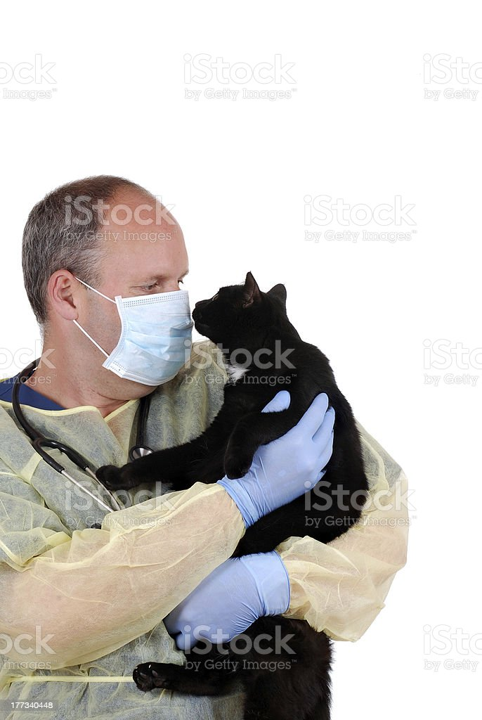 veterinarian with black cat royalty-free stock photo