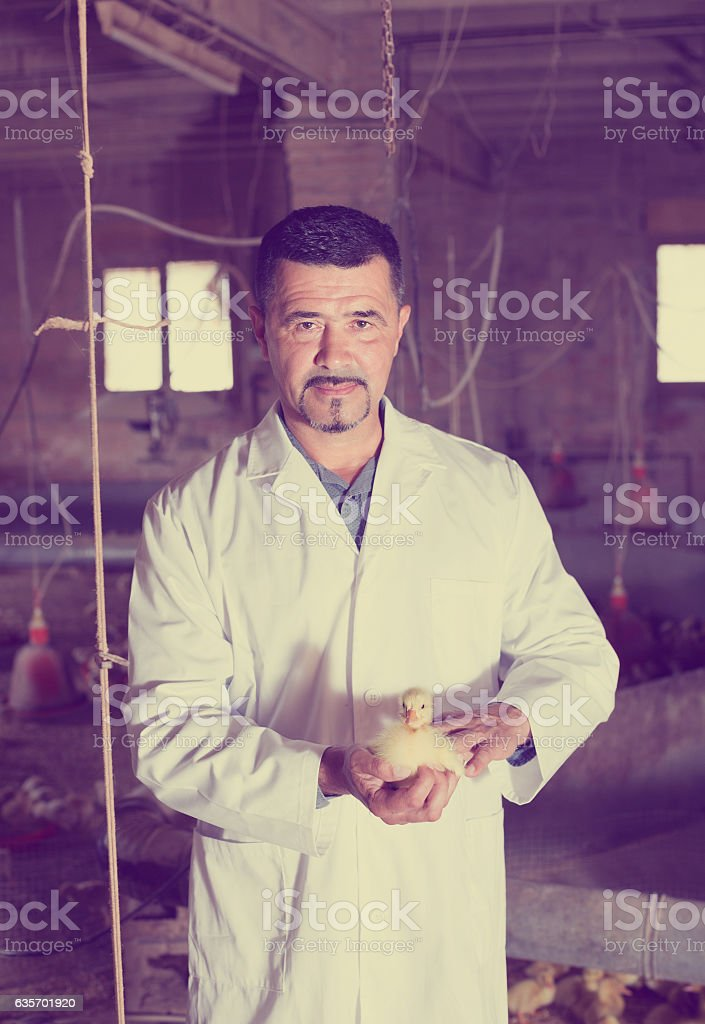 Veterinarian with duckling on farm royalty-free stock photo