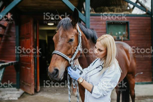 Veterinarian with horse picture id1151195868?b=1&k=6&m=1151195868&s=612x612&h=ghyaggm78fsoxtt8a4hz3vozwkj9bfppkykimoydpmo=