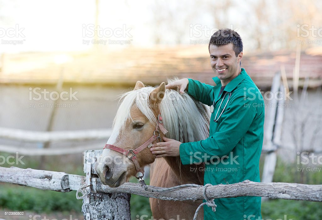 Veterinarian with horse stock photo