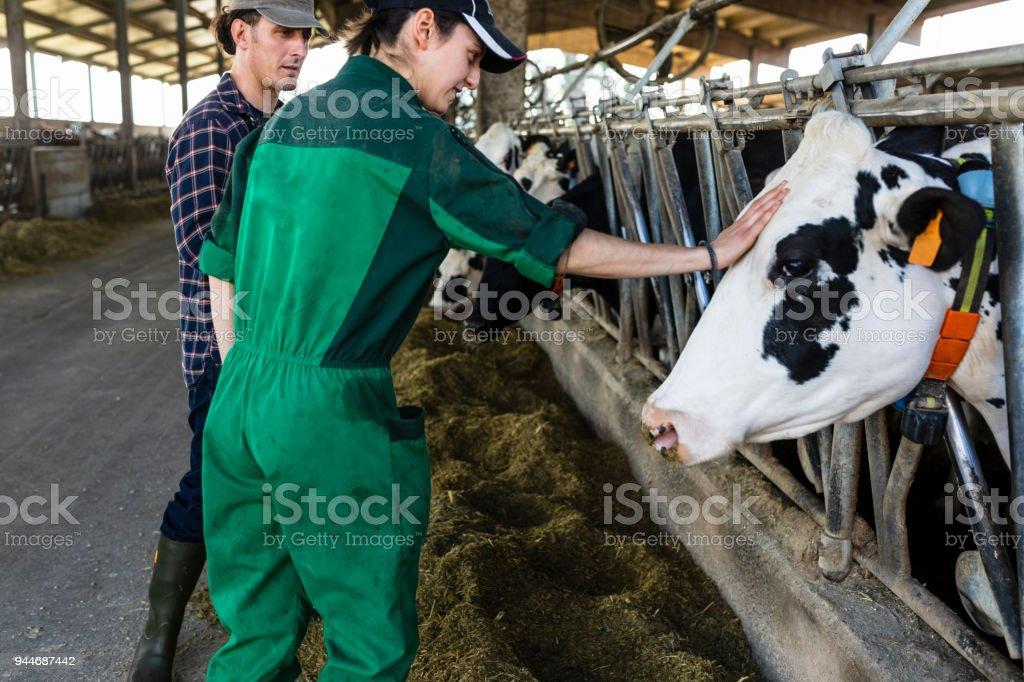 beef cattle veterinarian dr - 1024×682
