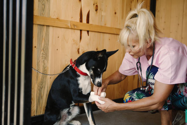 Veterinarian works at doggie daycare picture id1019256590?b=1&k=6&m=1019256590&s=612x612&w=0&h=icess8mmjeytbfboccejdvjidxevekhveqc1tfahkno=