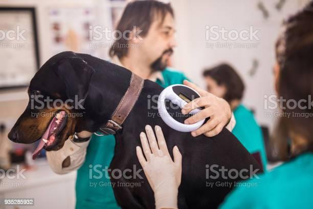 Veterinarians scanning dobermans chip at animal hospital picture id935285932?b=1&k=6&m=935285932&s=612x612&h=hjd7xpwbjhrelwpeh0mfaqisl9bl8eqwaioszygyrv0=