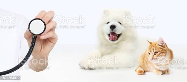 Veterinary care concept hand with stethoscope dog and cat isolated on picture id804263922?b=1&k=6&m=804263922&s=612x612&h=ym7haurjobkmz6iqgb8bsrwoa7omjo3x 9789mv jmg=