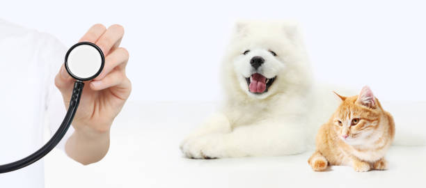 Veterinary care concept hand with stethoscope dog and cat isolated on picture id804263922?b=1&k=6&m=804263922&s=612x612&w=0&h=ubyuardvulzn1bfdwhvoplymzqcuvngan9hkjqrmn0u=