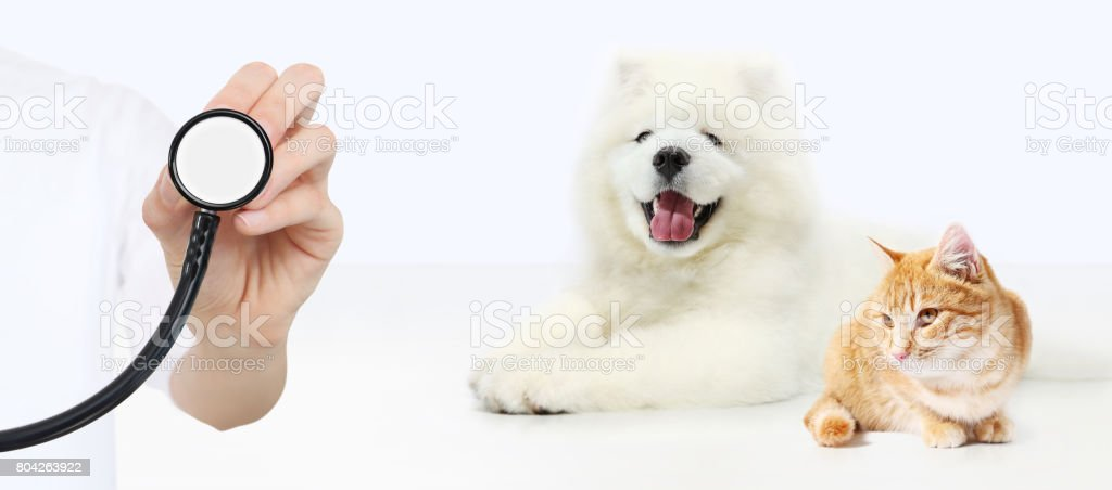 veterinary care concept. hand with stethoscope, dog and cat isolated on white background stock photo