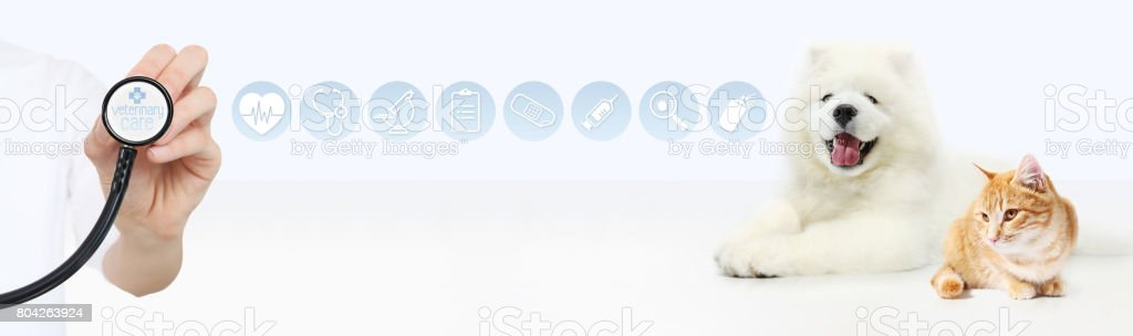 veterinary care concept. hand with stethoscope, dog and cat with graphic symbols isolated on white background stock photo