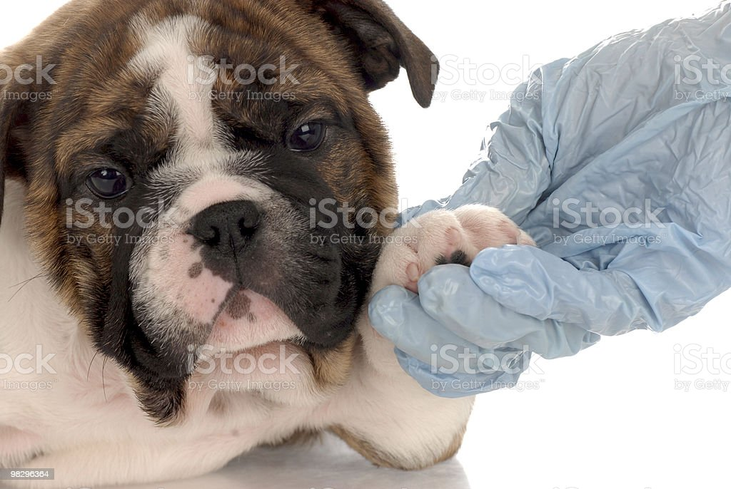 veterinary care royalty-free stock photo