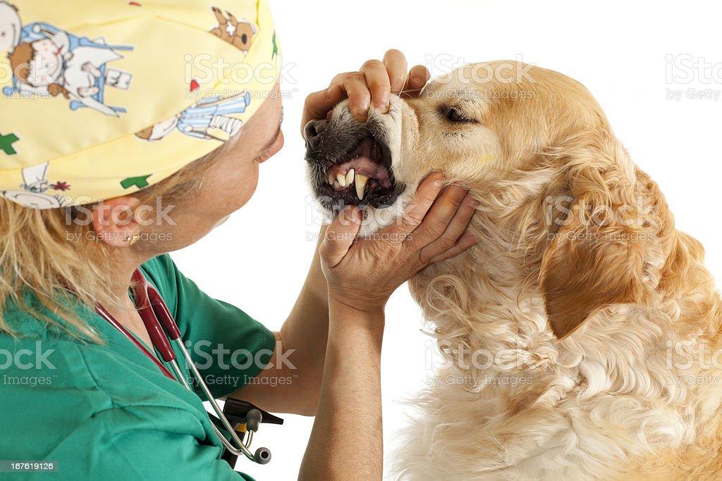 Veterinary consultation royalty-free stock photo