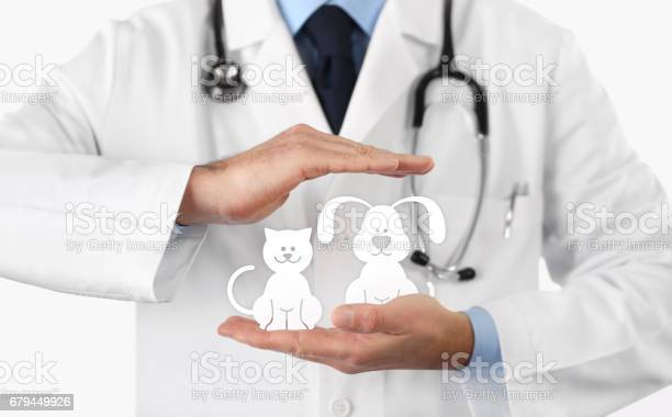 Veterinary doctor hands with animal icons vet clinic and pet care picture id679449926?b=1&k=6&m=679449926&s=612x612&h=vl2syr5nggxicnenshfxq30hm i9lbuvfdjaqgt9ank=