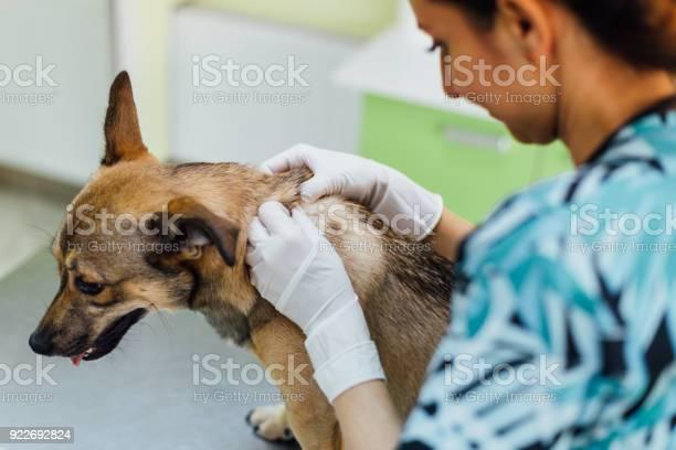 Veterinary dog hair consultation picture id922692824?b=1&k=6&m=922692824&s=612x612&h=zqmzik8vef2z28qci davesxl ieeoaecap6txur 9i=